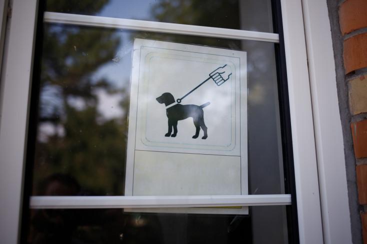 BORZALOM: Brutálisan lemészárolt kutyák tetemeire bukkantak, az egyiket meg is nyúzták