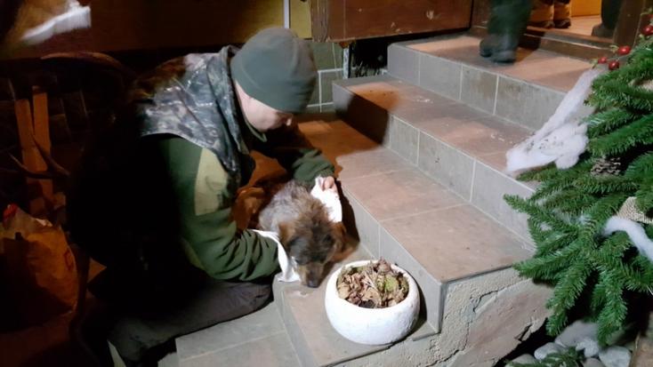 Rálőttek egy férfire az éjszaka – a golyók azonban a kutyáját találták el