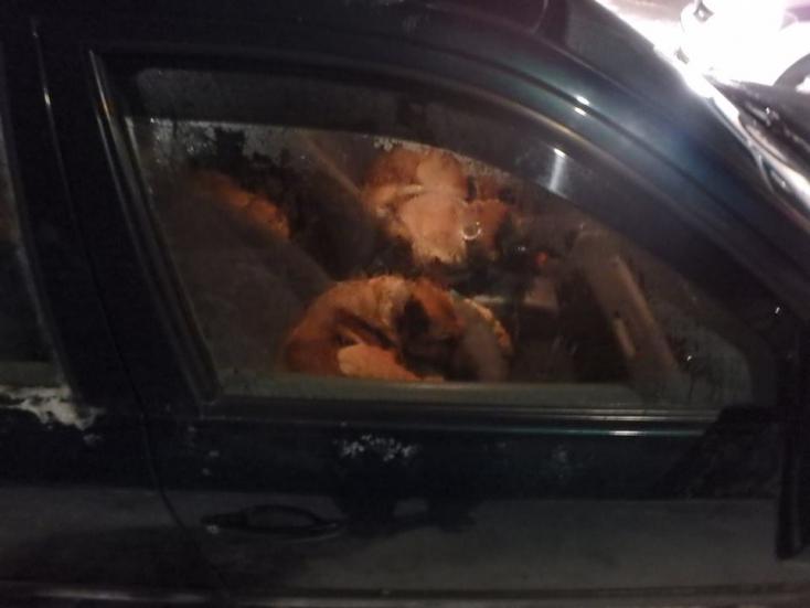Vágóhídra szállította a lopott kutyákat a hullarészeg sofőr, 5 ezreléket fújt!