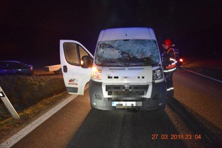 BALESET: A szarvas szó szerint berepült a furgon szélvédőjén - FOTÓK