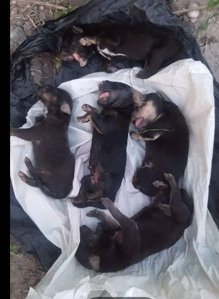 EMBERTELEN: Zsákba kötötték a kiskutyákat, majd kidobták őket Nagymegyernél