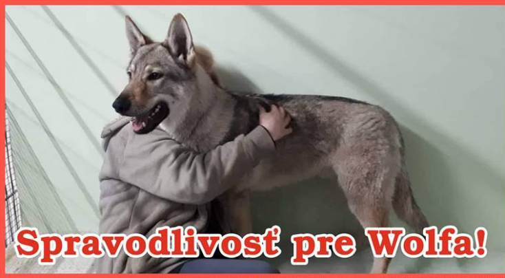BORZALOM: Karabiner volt a kutya bőre alatt, amelyet Dunatőkésnél találtak