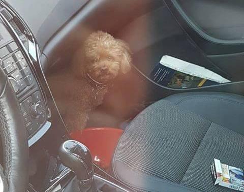 Eszednél vagy?! Felforrósodott autójában hagyta kutyáját egy nő, amíg elment vásárolni (FOTÓK)