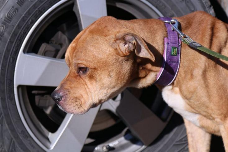 Borzalmas állapotban találtak rá egy garázsba zárt kutyára (FOTÓK)