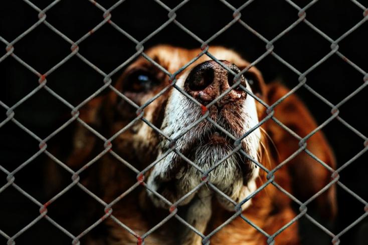Több mint kétezer állattal végzett brutális módon a spanyol sintér!