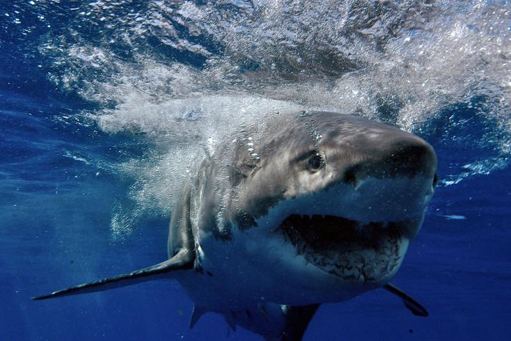 Cápa ölt meg egy férfit az ausztrál Aranyparton