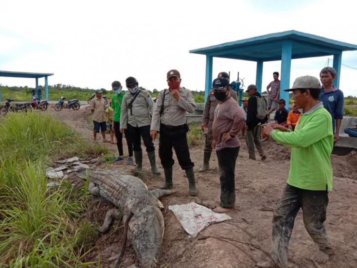 BRUTÁLIS: Krokodil gyomrában találták megaz eltűnt halász testrészeit–VIDEÓ18+