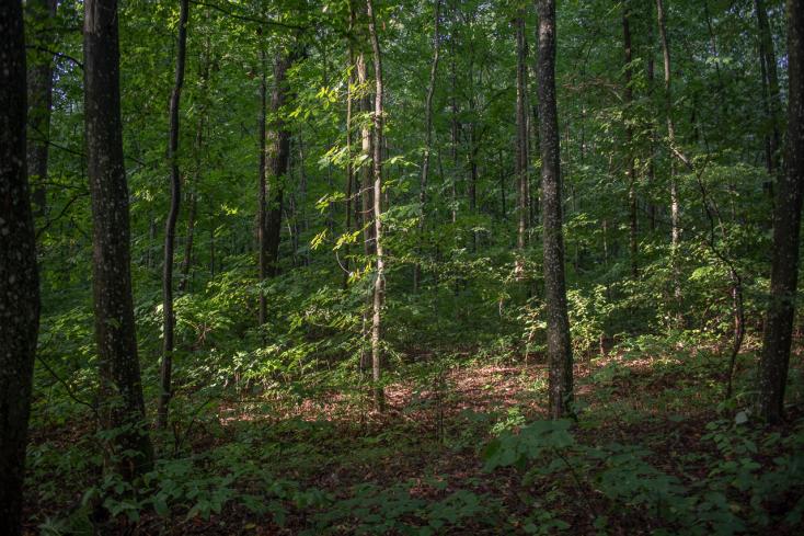 Fiatal szlovákiai férfi holttestére bukkantak a határ közelében
