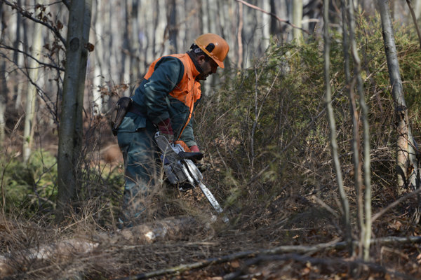 Szlovákiai vendégmunkást csapott agyon egy hatalmas faág Ausztriában!