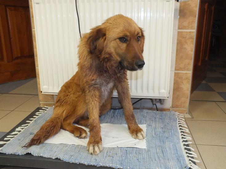 Két évre lecsukják a fószert, aki részegen elvágta kutyája nyakát, mert zavarta az ugatása!