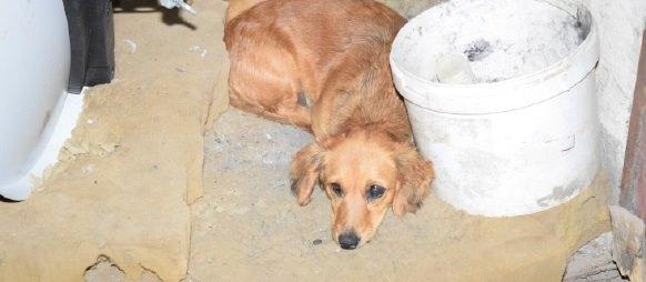 ÁLLATKÍNZÁS: Kivégzett három kutyát az elborult férfi!