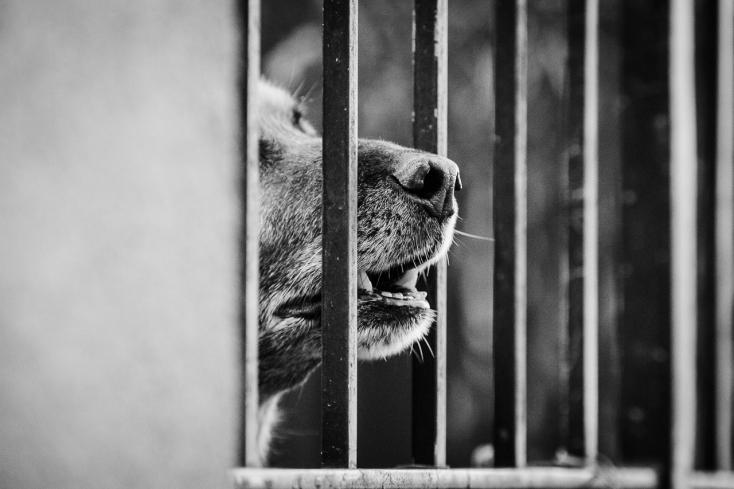 Katonai kutyák téptek szét egy katonát Ausztriában