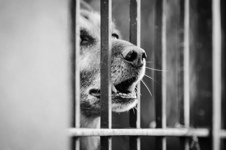 Borzalmas körülmények között tartottak egy németjuhászt, a kutya elpusztult