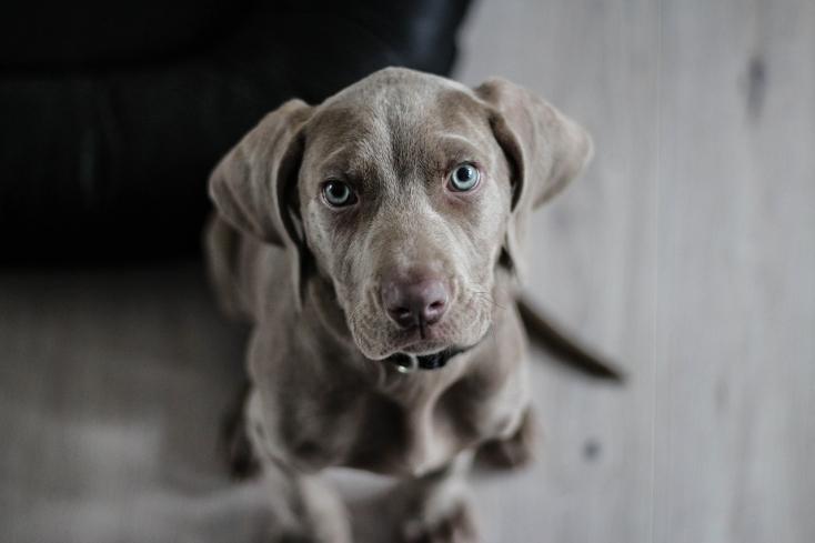 Kutyanyál okozott olyan brutális fertőzést, hogy amputálni kellett a gazdi végtagjait!