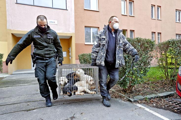 Elképesztő! Katasztrofális körülmények között tartottak 25 kutyát egy lakásban