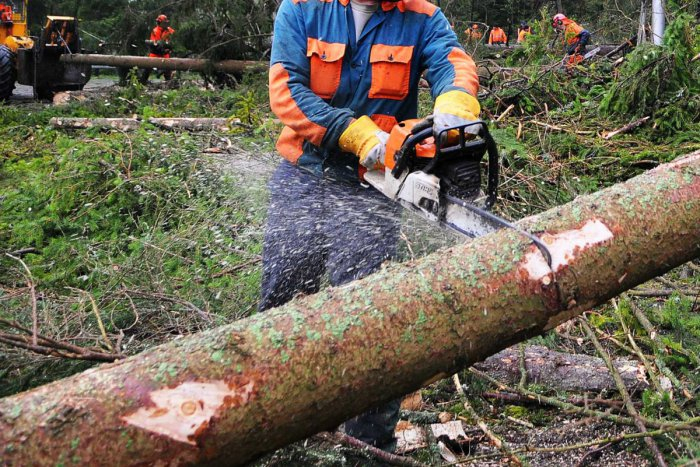 Súlyos baleset ért egy férfit favágás közben Dunatőkésen!