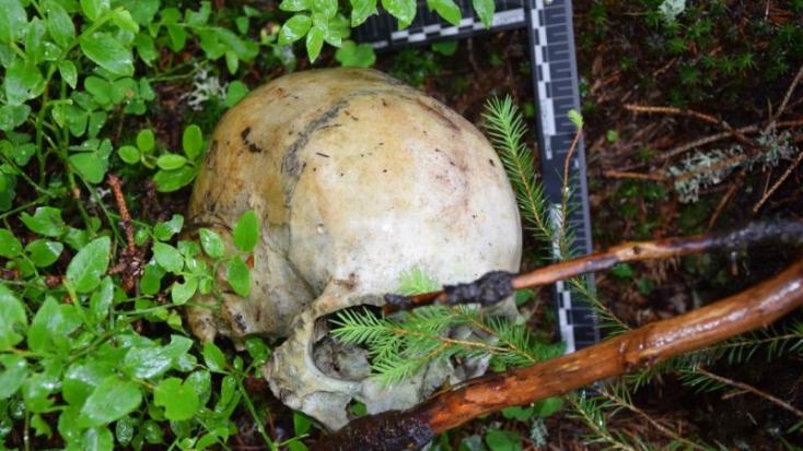 Rejtélyes halál: emberi koponyára bukkantak az erdőben (FOTÓK)